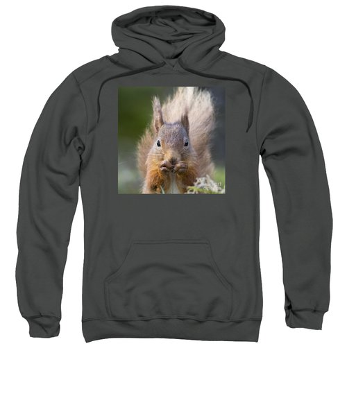 Red Squirrel - Scottish Highlands #28 Sweatshirt