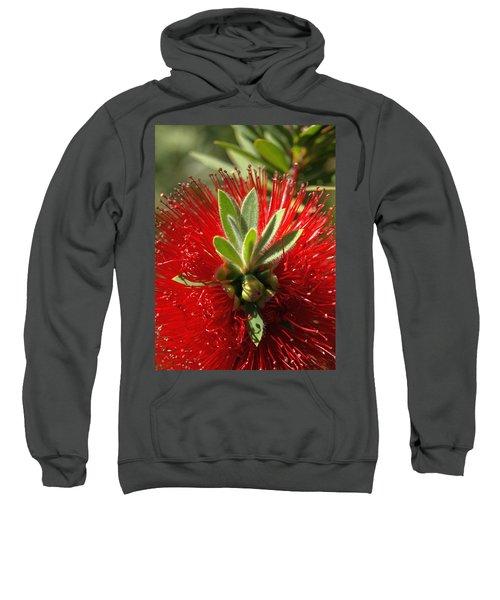 Red Surprise Sweatshirt