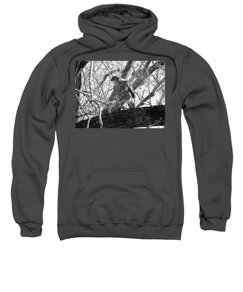Red Tail Hawk In Black And White Sweatshirt
