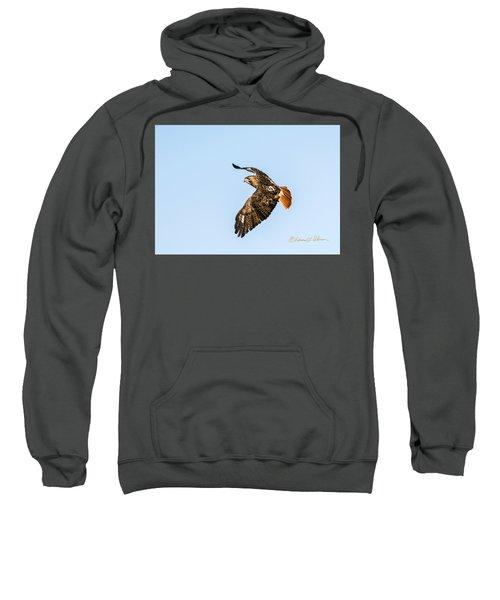 Red-tail Hawk In Flight Sweatshirt