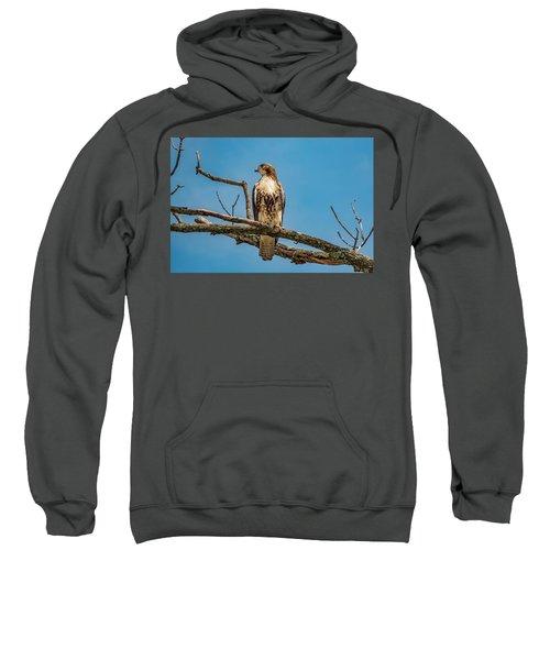 Red Tail Hawk Perched Sweatshirt