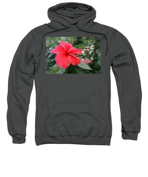 Red-tailed Flower Portrait Sweatshirt