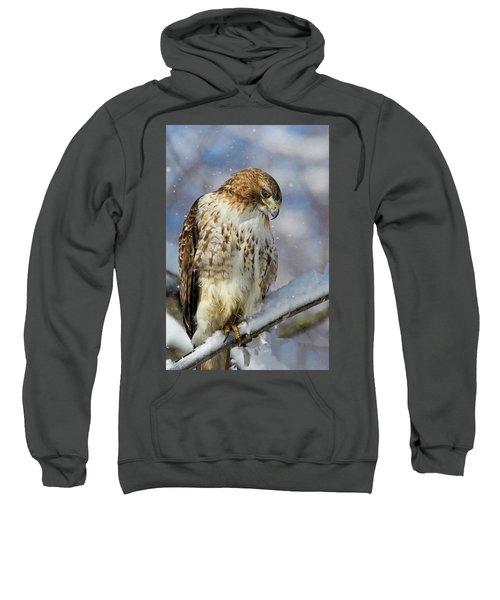 Red Tailed Hawk, Glamour Pose Sweatshirt