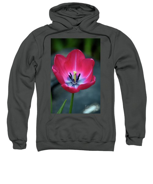 Red Tulip Blossom With Stamen And Petals And Pistil Sweatshirt