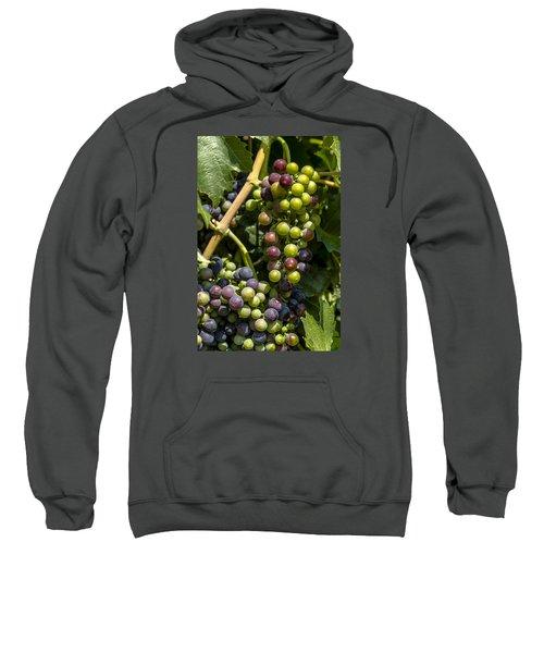 Red Wine Grape Colors In The Sun Sweatshirt