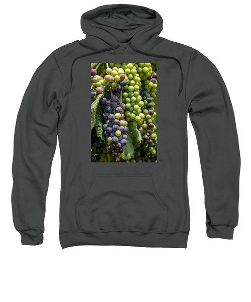 Red Wine Grapes In The Vineyard Sweatshirt