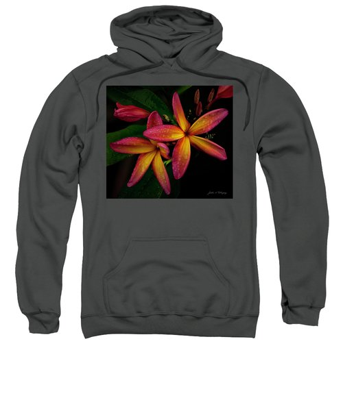 Red/yellow Plumeria In Bloom Sweatshirt