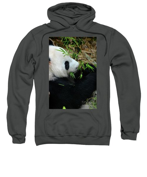 Relaxed Panda Bear Eats With Green Leaves In Mouth Sweatshirt