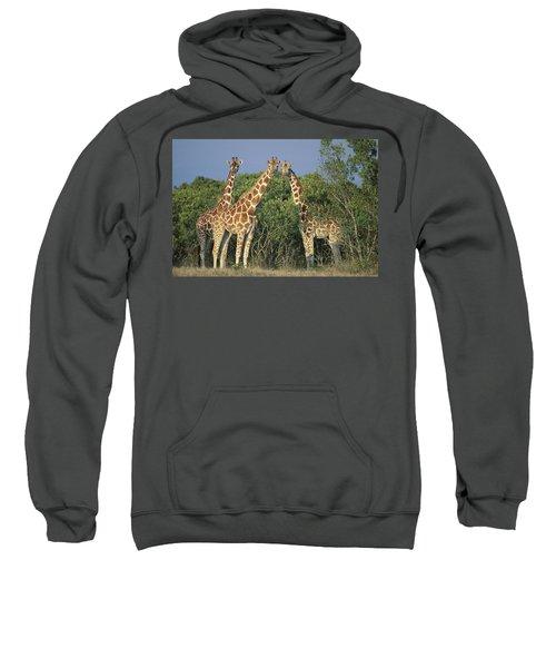 Reticulated Giraffe Trio Sweatshirt