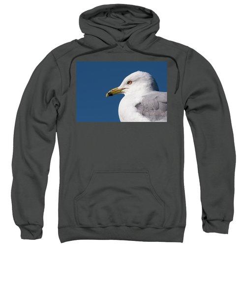 Ring-billed Gull Portrait Sweatshirt