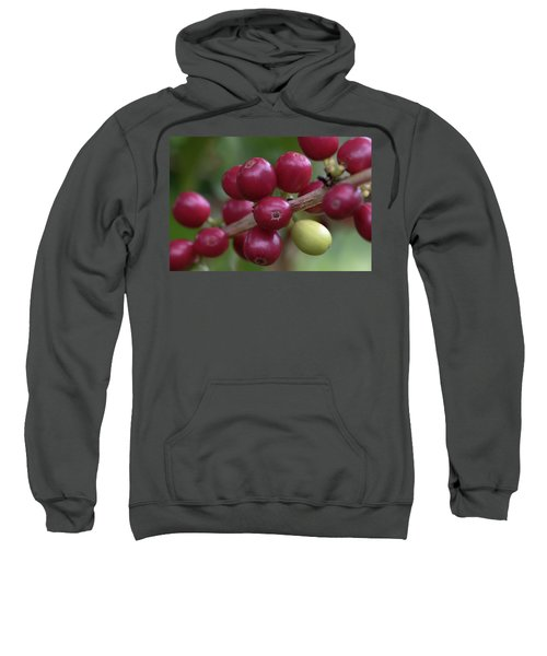 Ripe Kona Coffee Cherries Sweatshirt