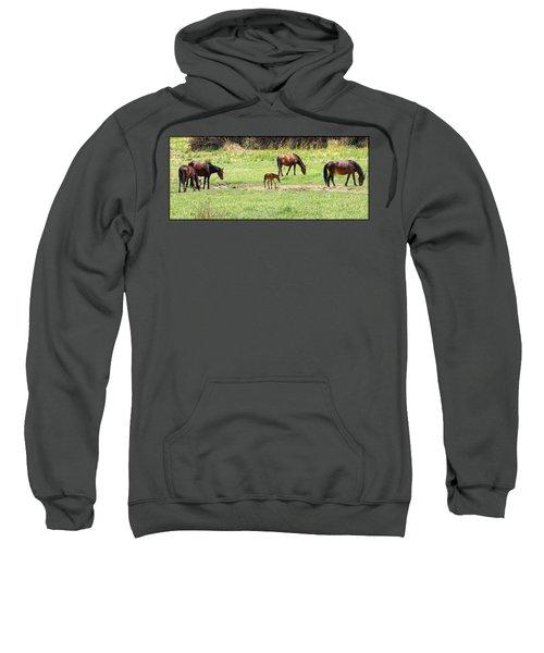 Roaming Freely Sweatshirt