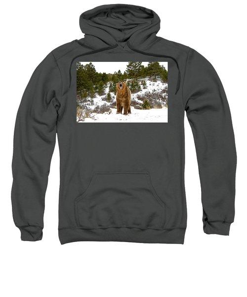 Roaring Grizzly In Winter Sweatshirt