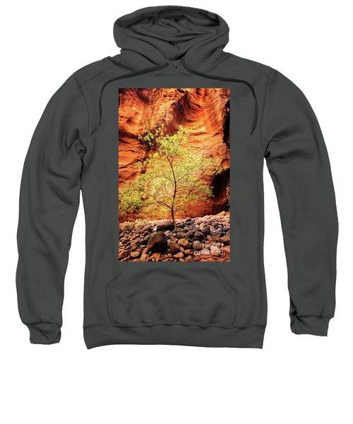 Rock Tree Sweatshirt