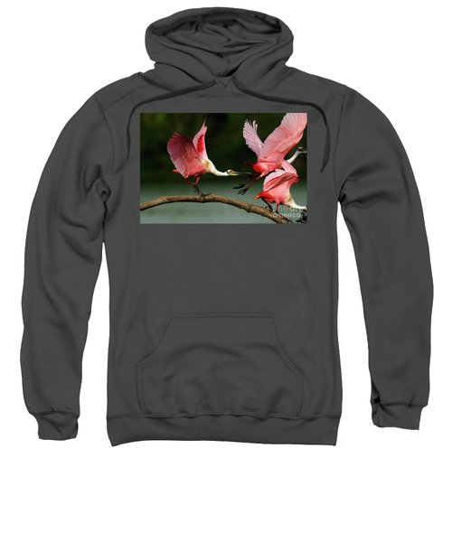 Rosiette Spoonbills Lord Of The Branch Sweatshirt by Bob Christopher