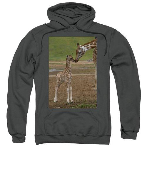 Rothschild Giraffe Giraffa Sweatshirt