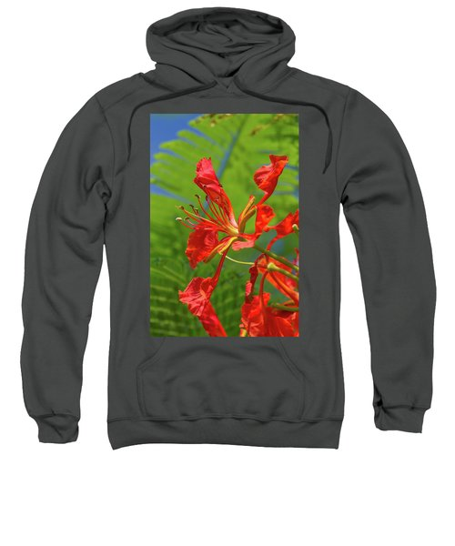 Royal Poinciana Flower Sweatshirt