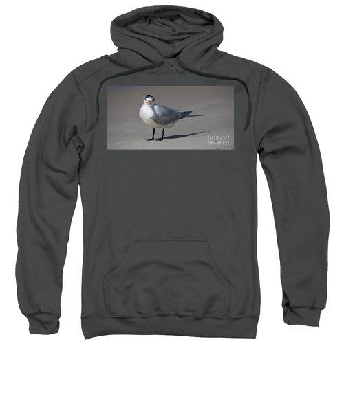 Royal Tern Sweatshirt
