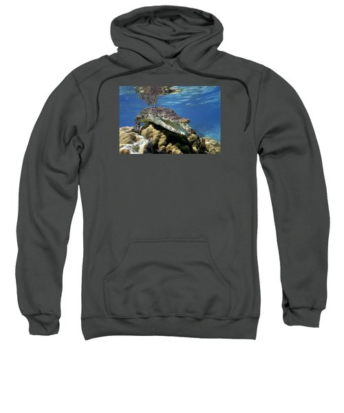 Saltwater Crocodile Smile Sweatshirt by Mike Parry