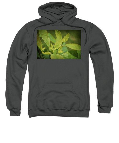 Sassafras Tree Sweatshirt
