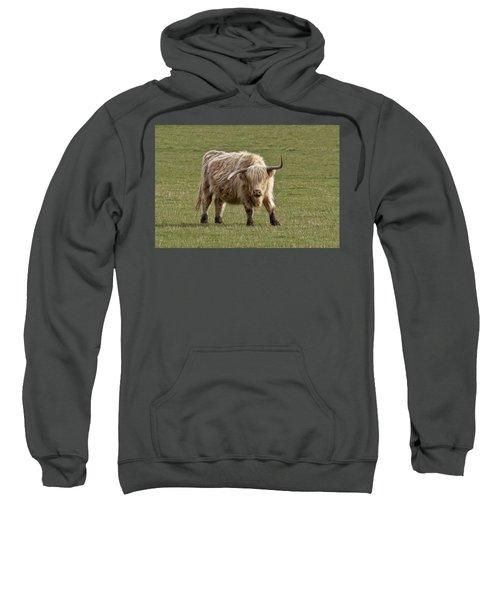 Sauvie Island Cow Sweatshirt