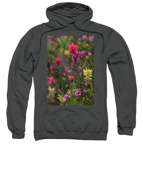 Scarlet Paintbrush Sweatshirt
