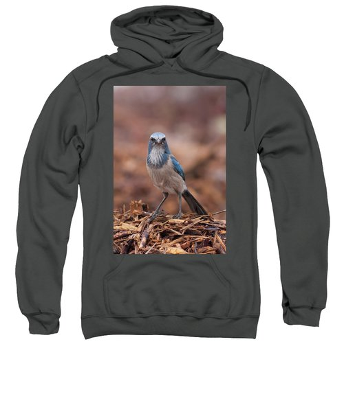 Scrub Jay On Chop Sweatshirt