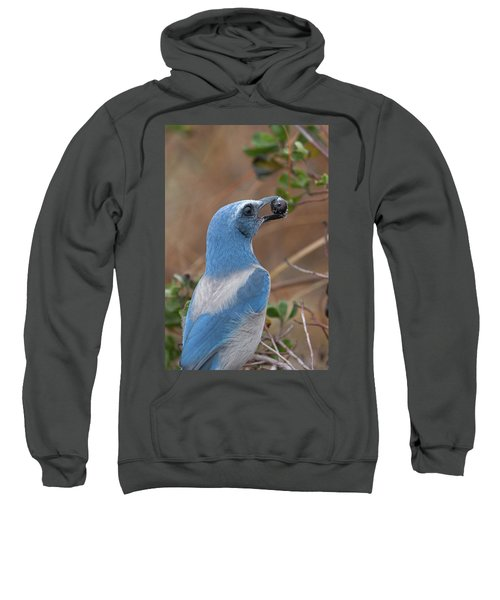 Scrub Jay With Acorn Sweatshirt