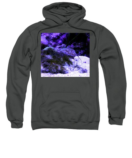 Sweatshirt featuring the photograph Sea Spider by Francesca Mackenney