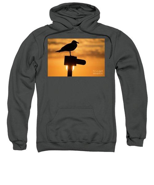 Seagull At Sunset Sweatshirt