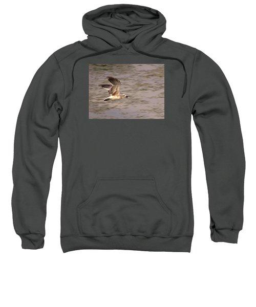 Seagull Flight Sweatshirt