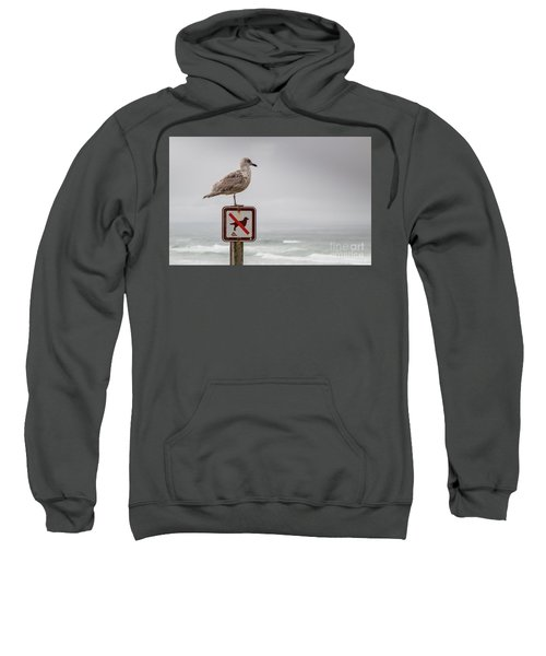 Seagull Standing On Sign And Looking At The Ocean Sweatshirt