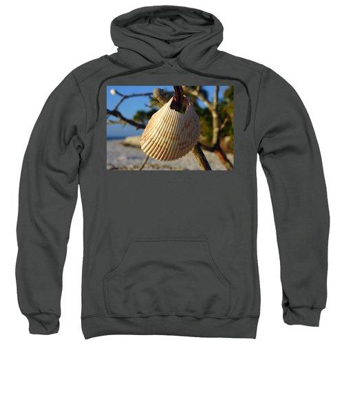 Cockelshell On Tree Branch Sweatshirt