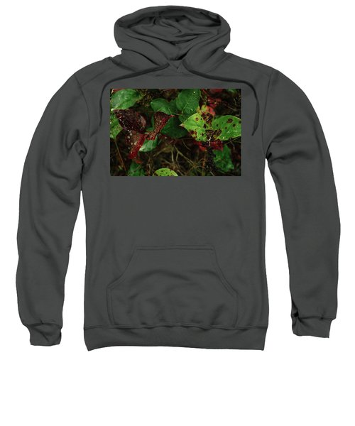 Season Color Sweatshirt