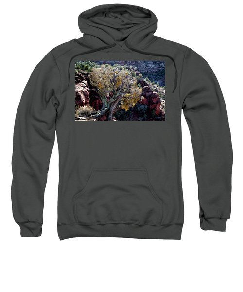 Sedona Tree #2 Sweatshirt