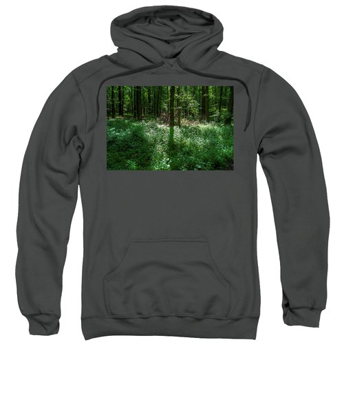 Shadow And Light In A Forest Sweatshirt