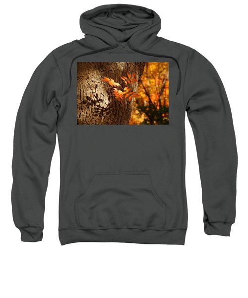 Fall Color Sweatshirt