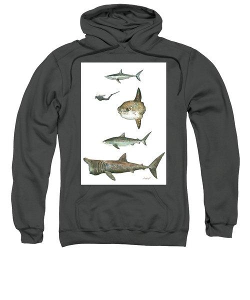 Sharks And Mola Mola Sweatshirt