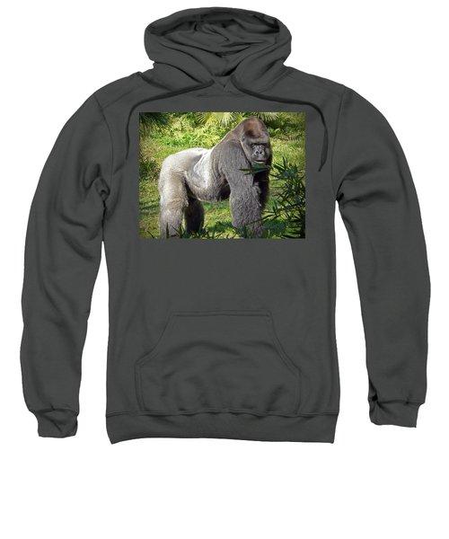 Silverback Sweatshirt