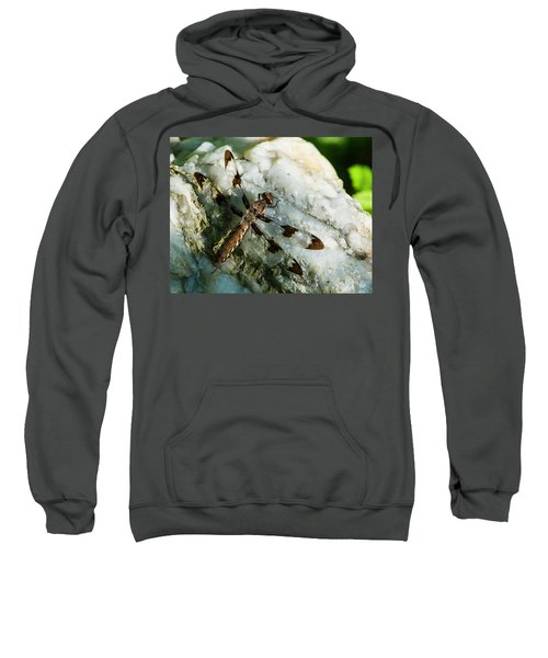 Six Spotted Dragonfly Sweatshirt