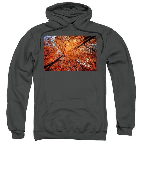 Sky Roots In Forest Red Sweatshirt