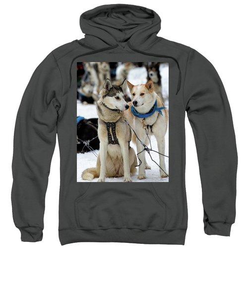Sled Dogs Sweatshirt