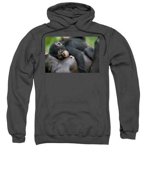 Sleeping Baby Chimpanzee Sweatshirt