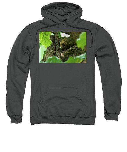 Sloth Sleeping Sweatshirt