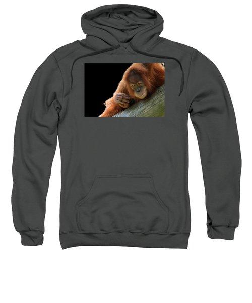 Cute Young Orangutan Sweatshirt
