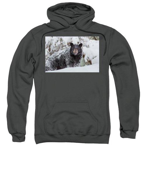 Snow Bear Stare Sweatshirt
