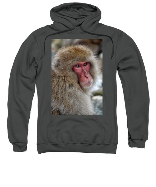 Snow Monkey Sweatshirt