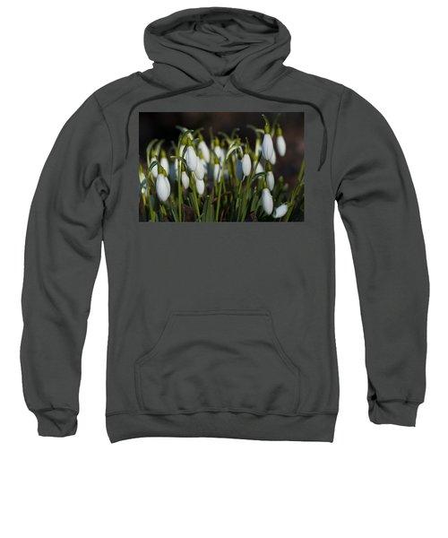 Snowdrops Sweatshirt