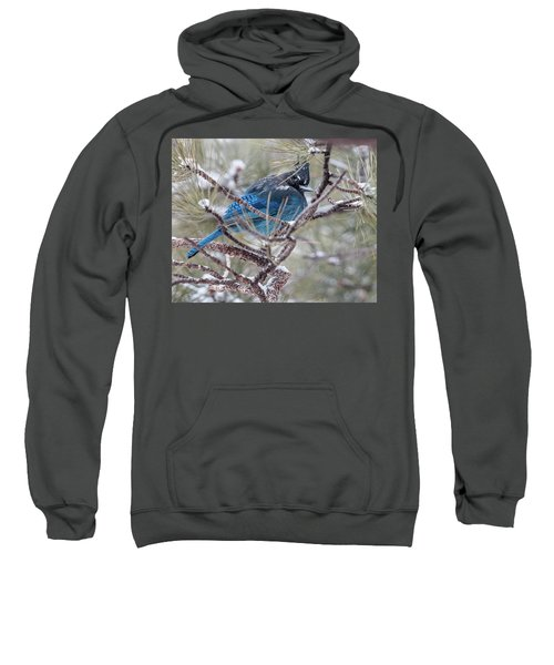 Snowy Bluejay  Sweatshirt