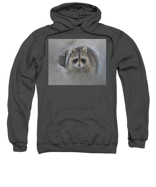 Snowy Raccoon Sweatshirt